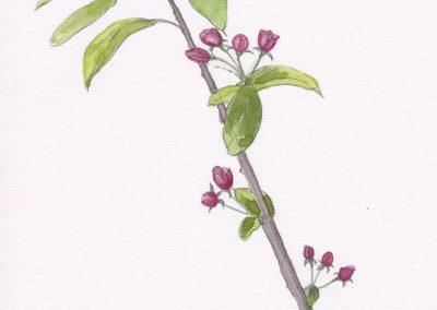 akvarel_blomster5-722x1024